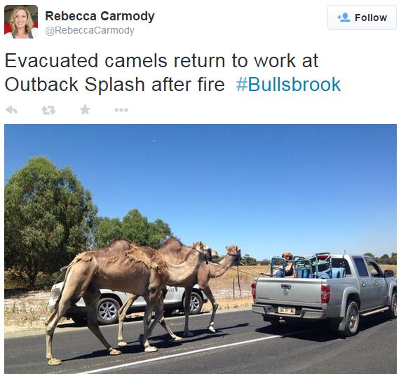 Bullsbrook fire camels