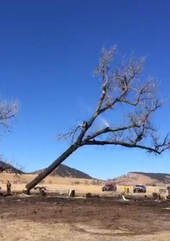 Dudley Fire tree felling