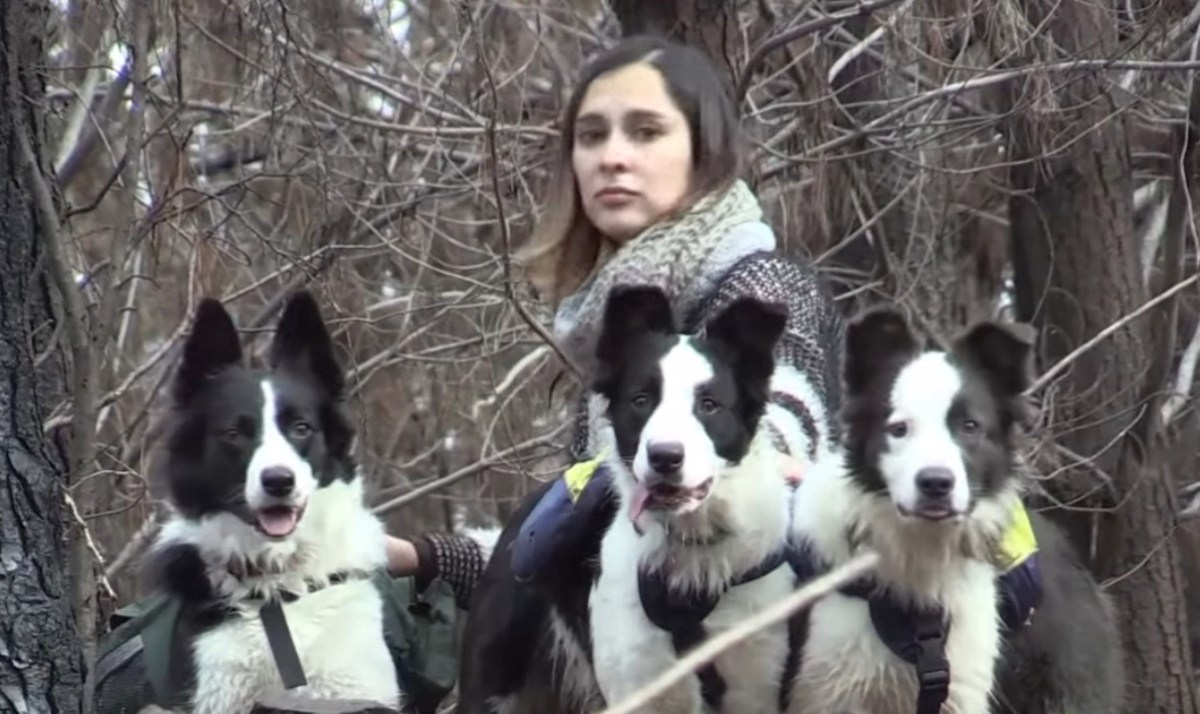 Border collies help reseed after forest fire