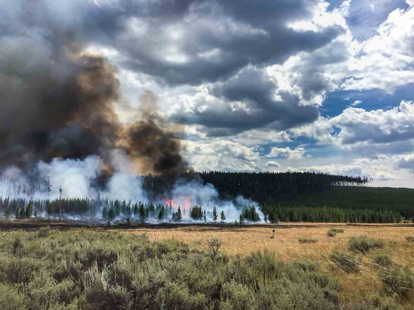 Maple Fire burns at Yellowstone National Park
