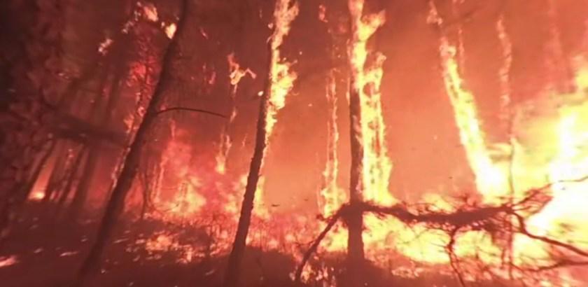 video in forest wildland wildfire fire