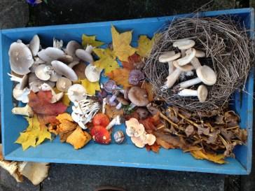 tray-of-mushroom-ballfin