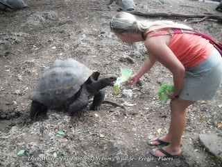 lady feeding Tortoises in Zanzibar