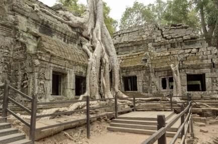 Ta Prohm a.k.a Tomb Rider Temple
