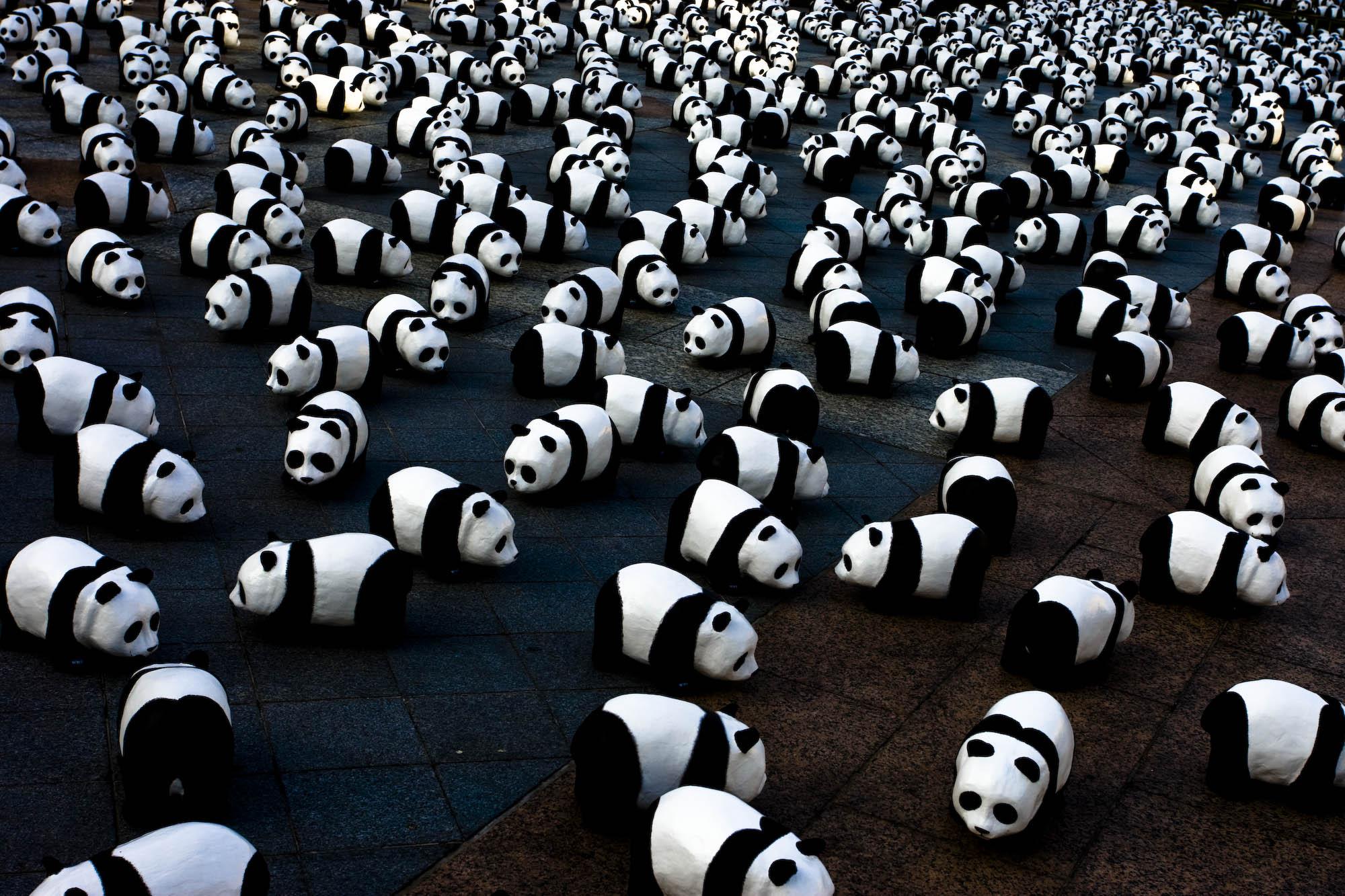 panda-assemblea
