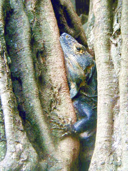Costa Rica Reptiles