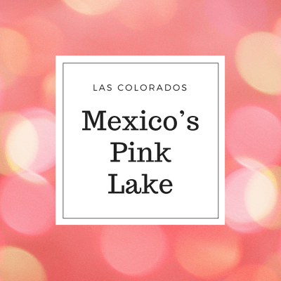 LAS COLORADOS – MEXICO'S PINK LAKE