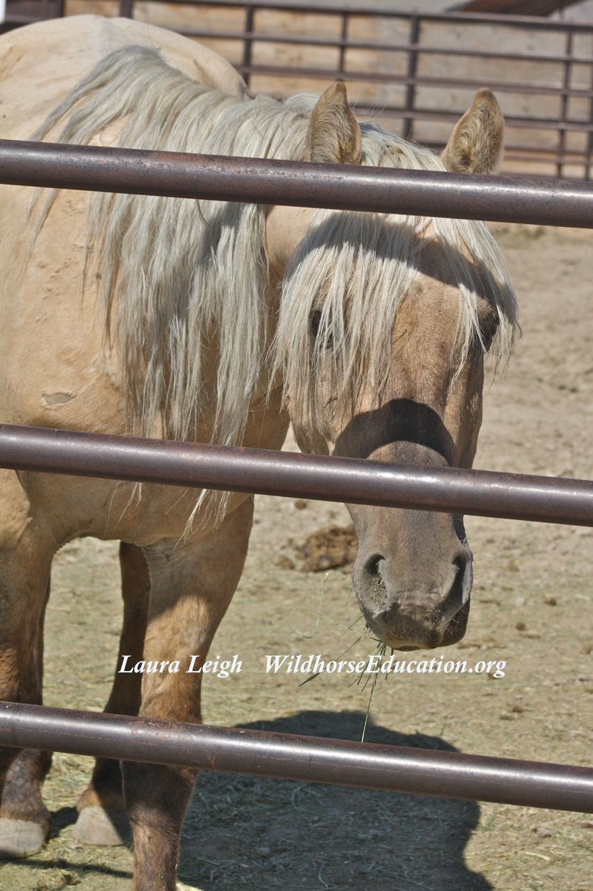1 Man 1 Horse Video Link do you care about sarge? – wild horse education