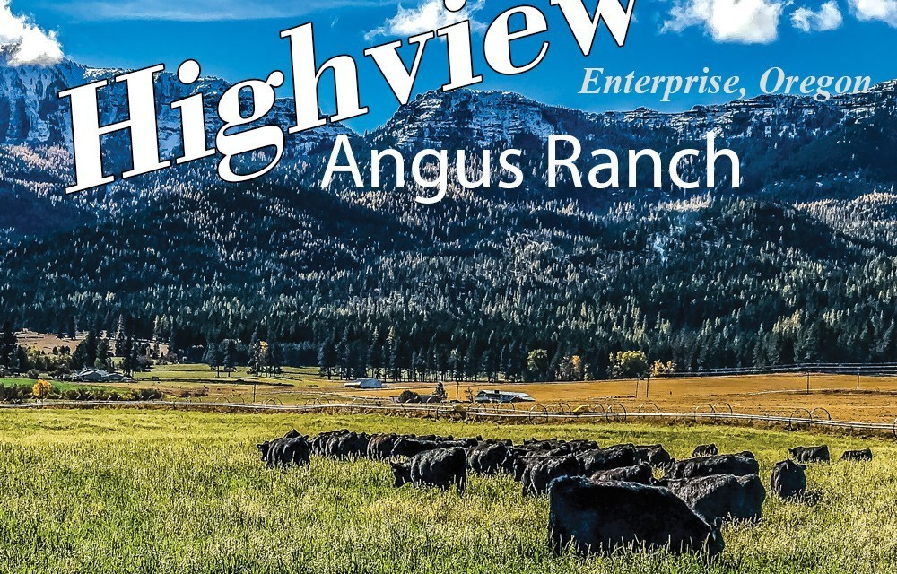 Scenes from Highview Angus Ranch