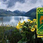 Poacher caught, convicted after traffic stop in eastern Oregon