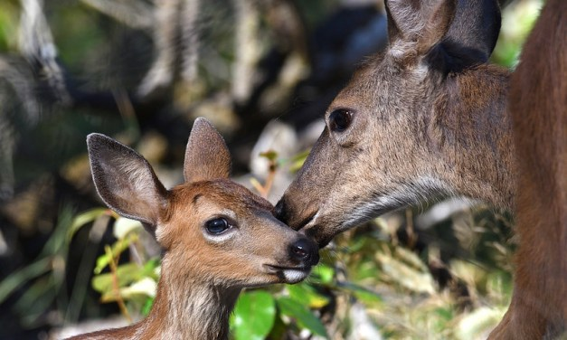 Young wildlife are rarely orphaned, so leave them where you find them—and keep your pets away too