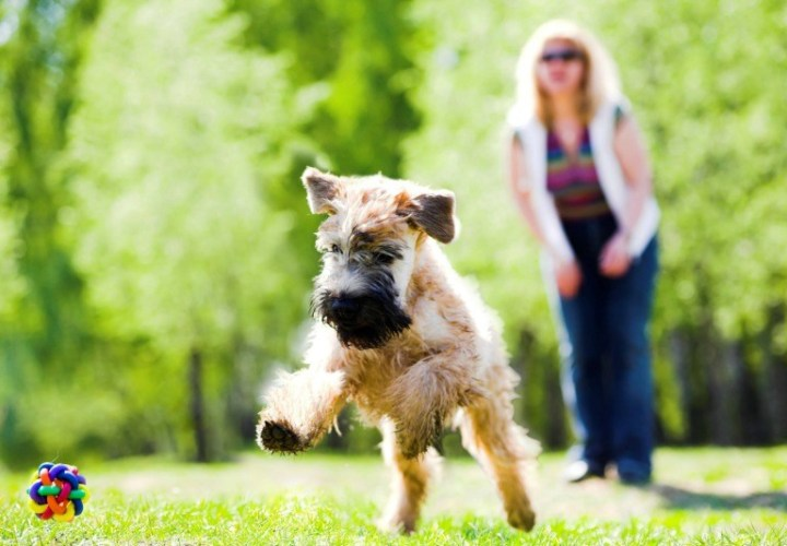 turf sunshine coast, lawn care for dog owners