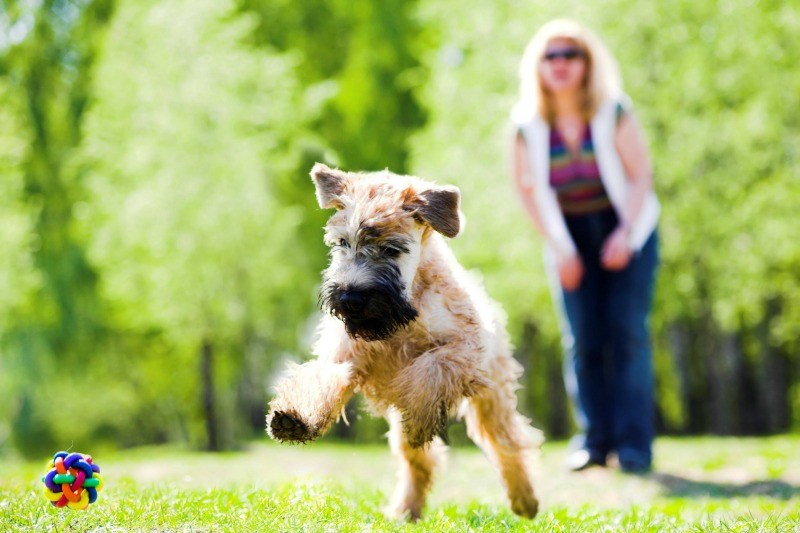 lawn care, turf sunshine coast, turf care for pet owners
