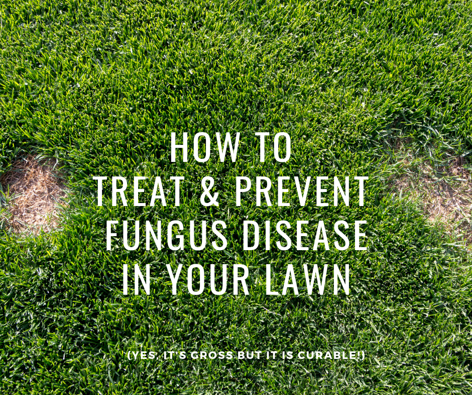 turf sunshine coast, lawn disease, fungus