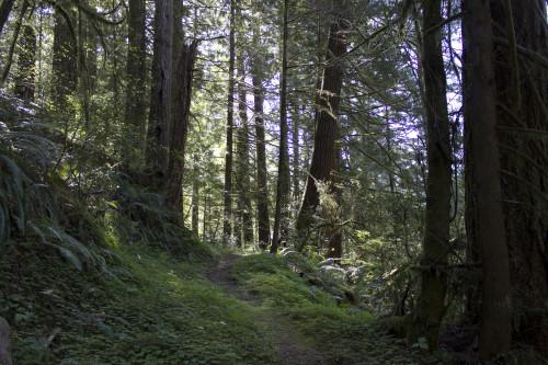 Pioneer trail, Oregon. Photo: Jason Thomas Pitzl.