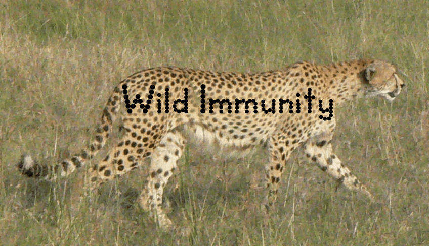 Wild Immunity Cheetah Logo