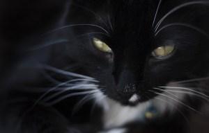 cat-2432996_1920