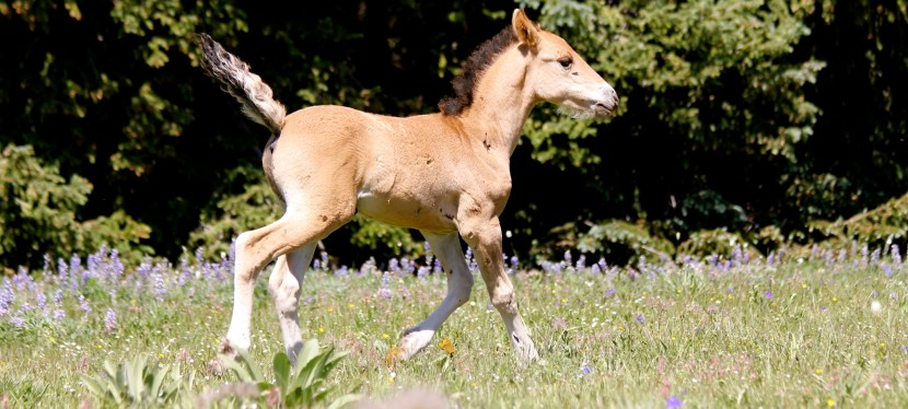 Who Will Have Foals This Year? ( part two)