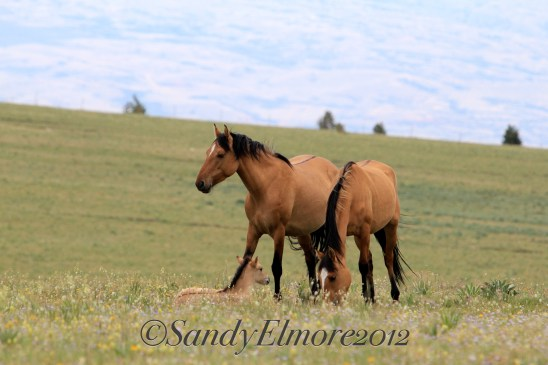Fools Gold, Kiva and Kiva's foal, July 7, 2012