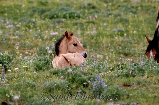 Kiva's foal, Madrid, July 2012