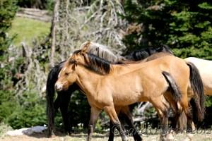 Mesa and Lobo, July 31, 2012