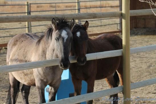 Kiabab and Liesl, November 5, 2012