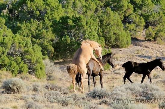 Durango and Icara, July 2012