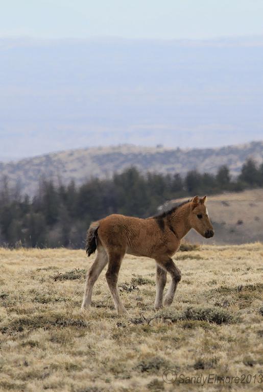 Fiasco and Custer's new colt, Nodin, April 28, 2013