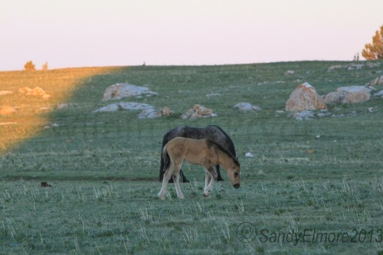 Custer and Nodin, June 16, 2013