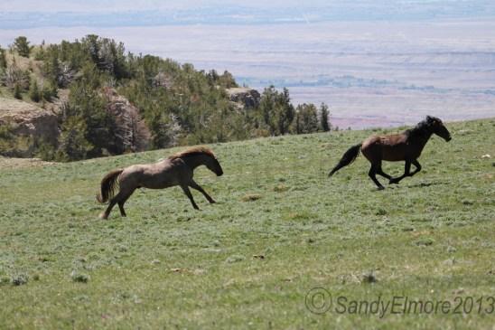 Coronado chases Santa Fe.