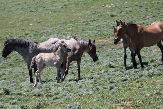 Halycon and her filly, June 16, 2013