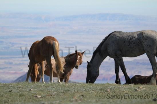 Missoula, Tecumseh and Teton