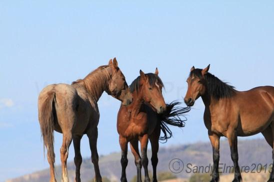 Tecumseh, Gringo and Galadrial