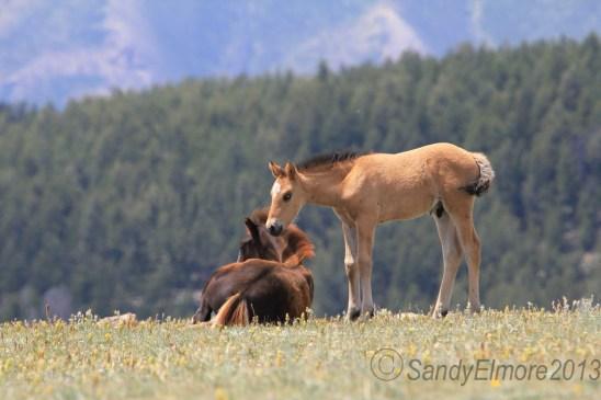 Noble and Graciana's very spunky colt