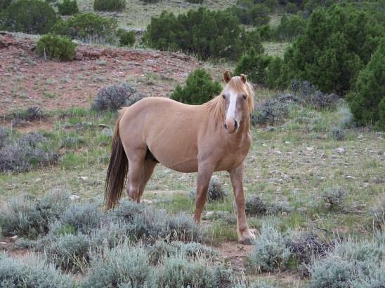 Durango, 2009.  Photo by Linda Dombeck.