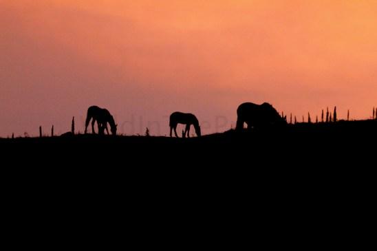 Sunset, August 19, 2013