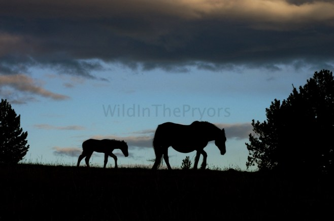 Washakie and her colt, September 18, 2013