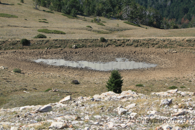 Mystic Pond is almost completly dry.