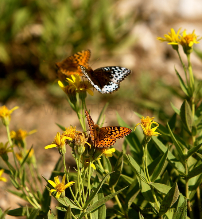 Butterflies on some flowers near the pond