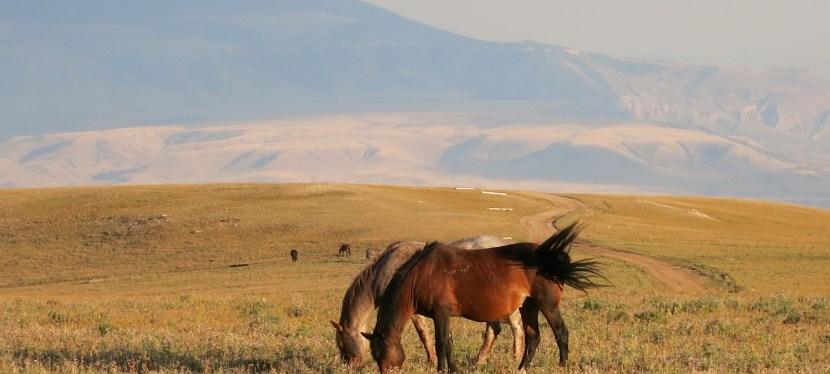 Wild Horses in Montana Preview