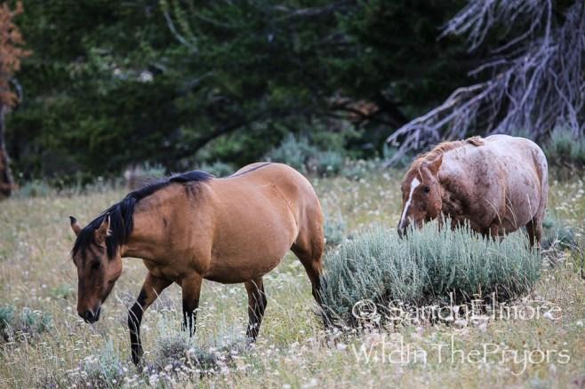 Ketchikan and Tecumseh