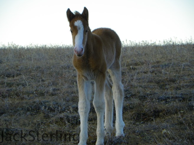 Ketchikan's new Colt!  10-26-14