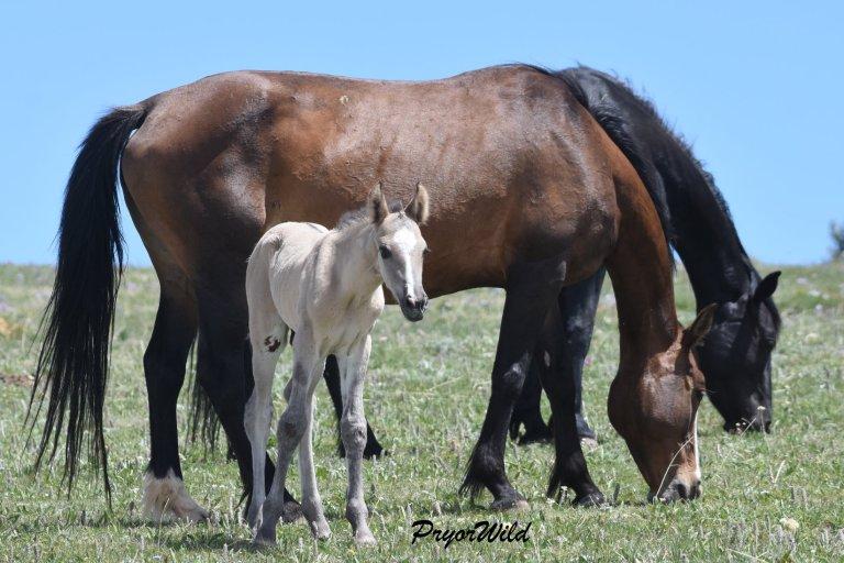 Jacinta and foal