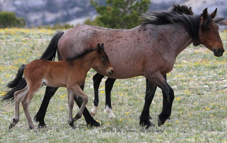 Niobrara and Foal