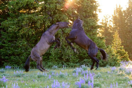Lakota and Grijala, July 2011