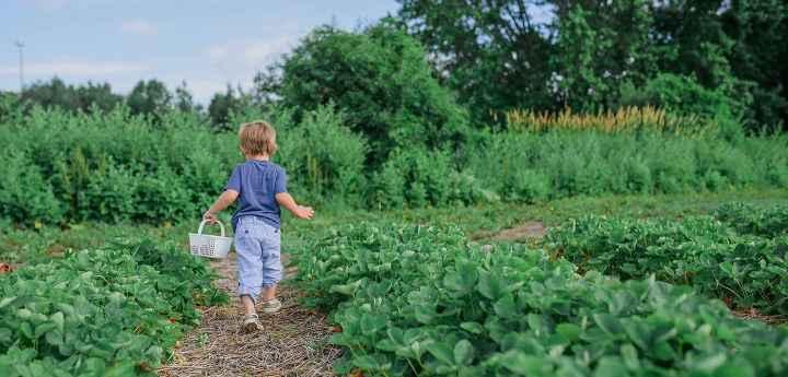 Activities that teach sustainability