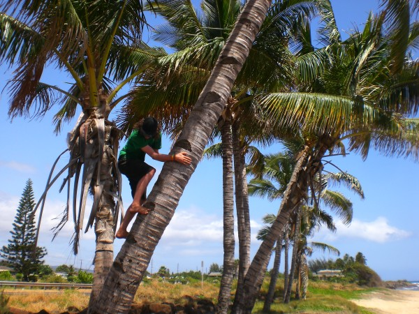 Me attempting to climb a coconut tree to get the coconuts at the top. Its harder than it looks!