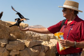 Masada feeding the birds