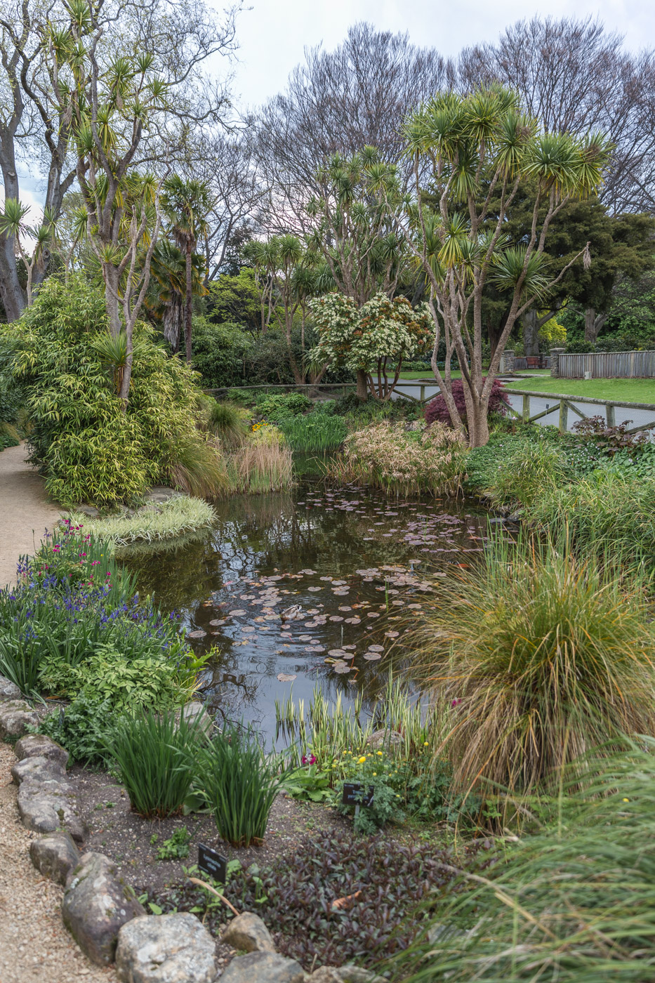 Small pond and bridge at the Dunedin Botanical Gardens, South Island, New Zealand