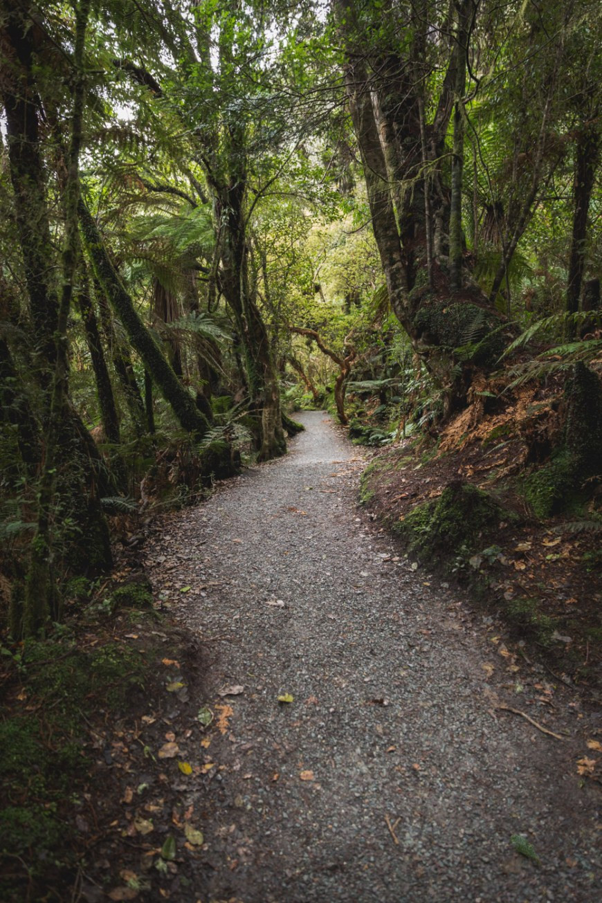 McClean Falls Trail, South Island New Zealand